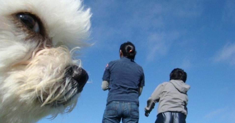 21.jul.2015 - Esse não é um cachorro gigante tentando contato com humanos. O animal só apareceu no momento da foto em frente à câmera dando essa impressão. É tudo culpa da perspectiva