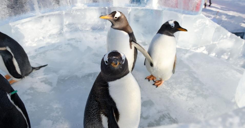 26.dez.2016 - Vista do topo do escorregador de gelo instalado para os pinguins do parque temático Harbin Polarland, na China