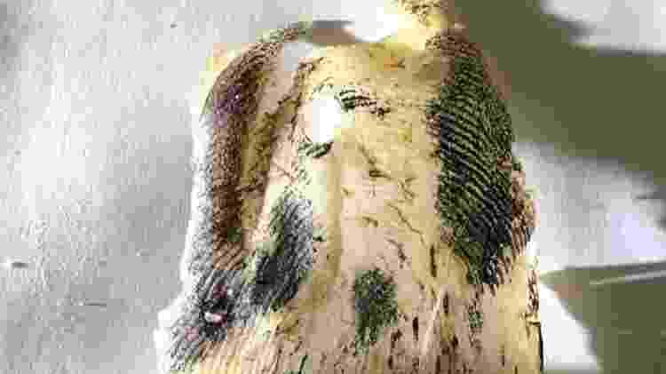 Fragmento da impressão digital com tinta - Sindpep/Divulgação