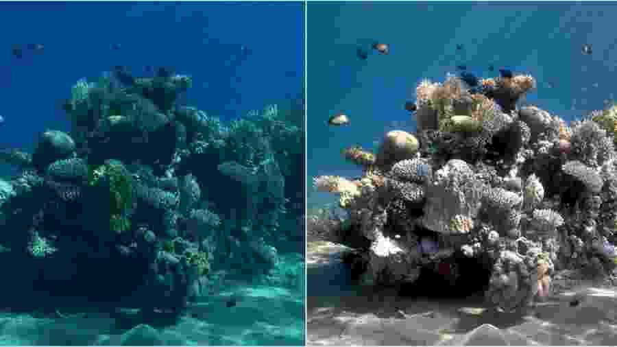 Transformação de imagem subaquática pelo algoritmo Sea-Thru  - Matan Yuval/Sea-Thru/Reprodução