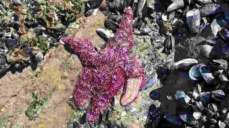 Animais marinhos sofrem com calor intenso no Canadá - Christopher Harley/University of British Columbia. - Christopher Harley/University of British Columbia.