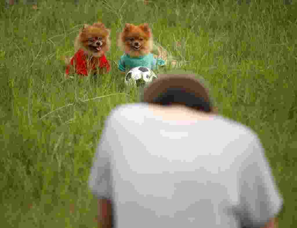 25.set.2015 - Cães participam de sessão de fotos ao ar livre em Nantong, na província de Jiangsu, no leste da China. As chinesas Zong Wenqi e Ni Jianling estudaram juntas na escola e resolveram combinar a paixão por fotos e animais para criar um estúdio especializado em fotografia de animais de estimação - Huang Zhe/ Xinhua