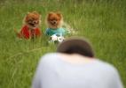 Bonito para cachorro: Estúdio de fotos na China faz cliques de cães e gatos - Huang Zhe/ Xinhua