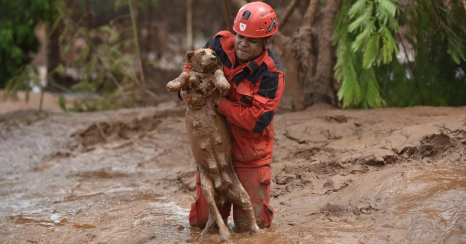 9.nov.2015 - Bombeiro resgata uma cadela de dentro da lama em Paracatu de Baixo, Minas Gerais, dias após o rompimento de duas barragens da mineradora Samarco destruir a vila de Bento Rodrigues e outras localidades de Mariana (MG)