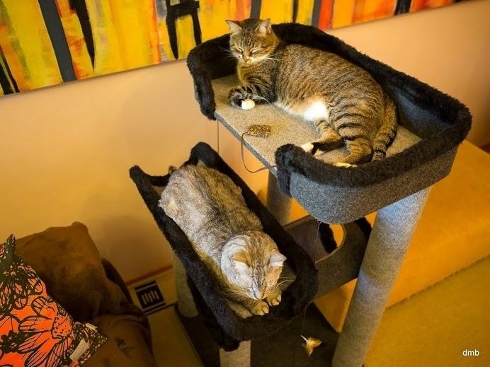 Cozy Gatos, marcenaria para gatos