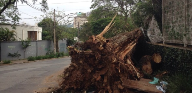 Árvore cai em rua em Pinheiros após forte chuva na capital; prefeitura demorou ao menos 4 dias para fazer a remoção