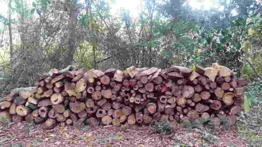 Durante estudo, pesquisadores encontraram área de floresta secundária desmatada na região de Bragantina - Fernando Elias/Divulgação