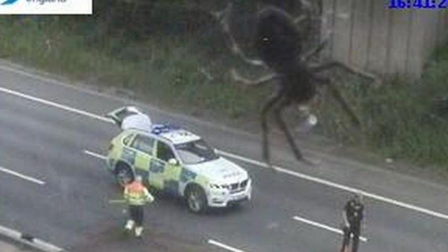 """Imagem da suposta aranha """"gigante"""" na Inglaterra - Reprodução/Highways England"""