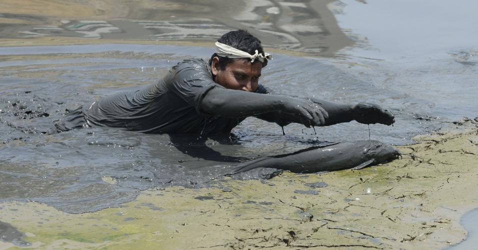 10.mai.2016 - Em operação de resgate, indiano retira peixe ameaçado em lago que está secando na região de Ahmedabad. Os peixes resgatados devem ser enviados para o rio Sabarmati, em Ahmedabad