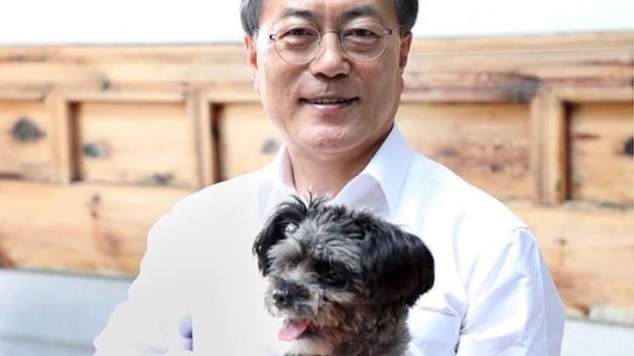 O setor de animais domésticos está em pleno crescimento na Coreia do Sul e cada vez mais residências têm um cão, a começar pelo presidente Moon Jae-in - CHEONG WA DAE HANDOU