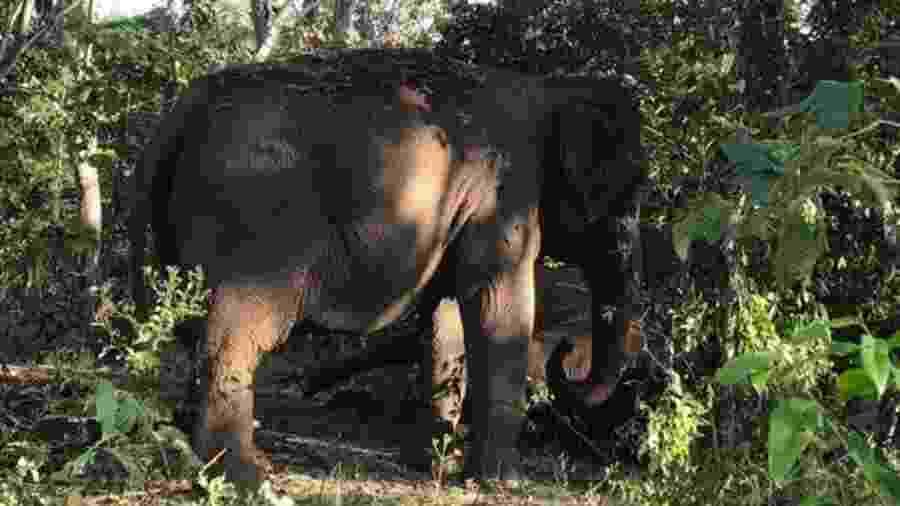 Maia observa o corpo da companheira Guida em santuário na Chapada dos Guimarães - Santuário de elefantes Brasil