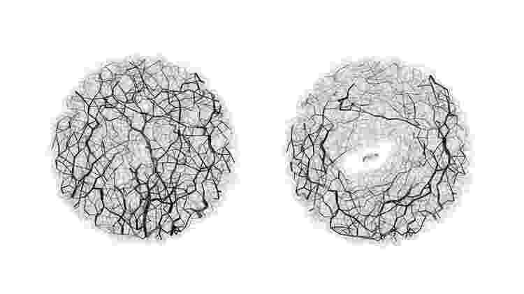 As formigas tendem a cavar túneis relativamente retos - Caltech/Reprodução - Caltech/Reprodução