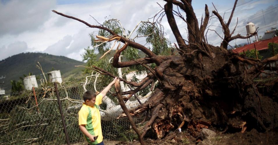 24.out.2015 - 24.out.2015 - Um garoto observa as raízes de uma árvore que foi derrubada pela tempestade tropical Patricia, que atingiu a costa oeste do México entre sexta-feira (23) e este sábado (24). Antes de atingir a costa mexicana, Patricia foi considerada o furacão com os ventos mais fortes já registrados. Apesar do recorde, os danos causados pela tempestade foram menores que o esperado