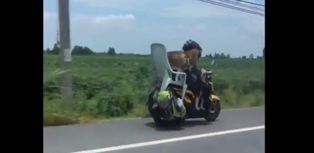 Motorista flagrou a moto com o cachorro sobre a cadeira de plástico em estrada da Tailândia - Reprodução/Twitter@Stickboy Bangkok