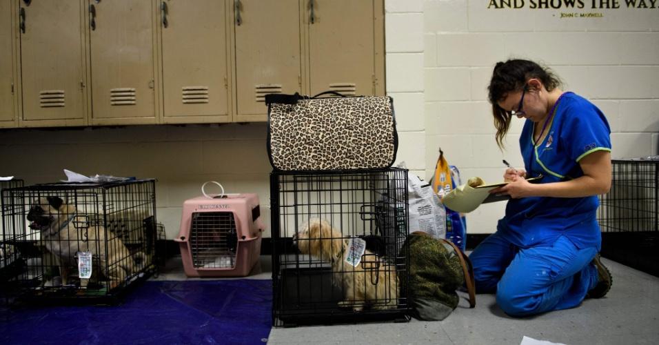 10.out.2018 - animais domésticos também são levados e cuidados dentro dos abrigos
