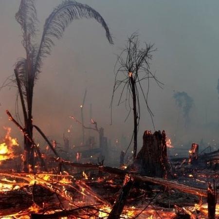 35% do desmatamento na Amazônia entre agosto de 2018 e julho de 2019 se deu em terras públicas não destinadas, categoria visada por grileiros - Reuters