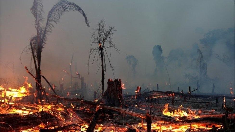 Desmatamento da Amazônia aumenta 55% em relação a 2019 e bate recorde