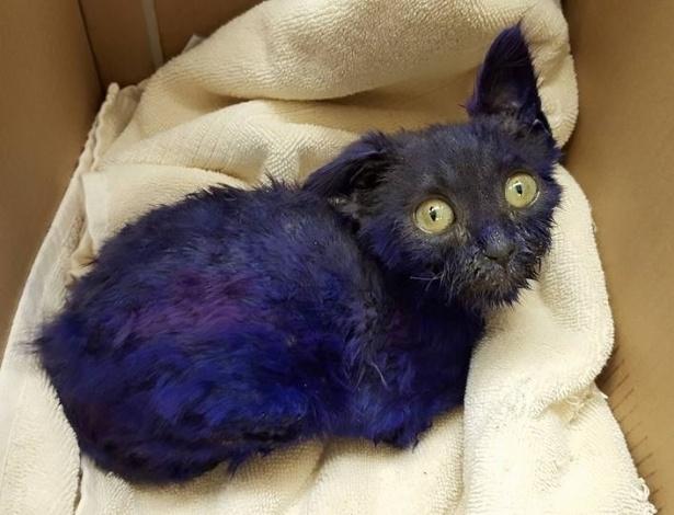 Gatinho apelidado de Smurf foi pintado de roxo e usado como brinquedo para cachorro