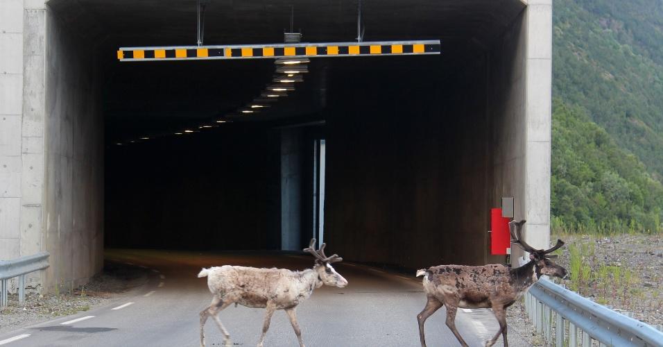 3.jul.2016 - Renas se escondem em túneis devido ao calor na Noruega