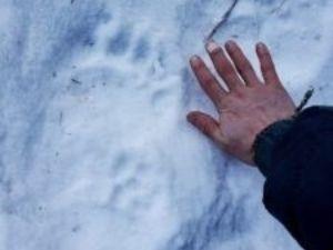 Irmão da vítima achou pegadas de urso no dia seguinte ao susto - Erik Stevens/Arquivo pessoal - Erik Stevens/Arquivo pessoal
