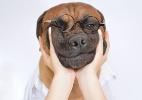 Com trajes de nerd, mocinho e até vilão, cão vira celebridade no Instagram - Reprodução/Instagram/@hoohoo_thebully
