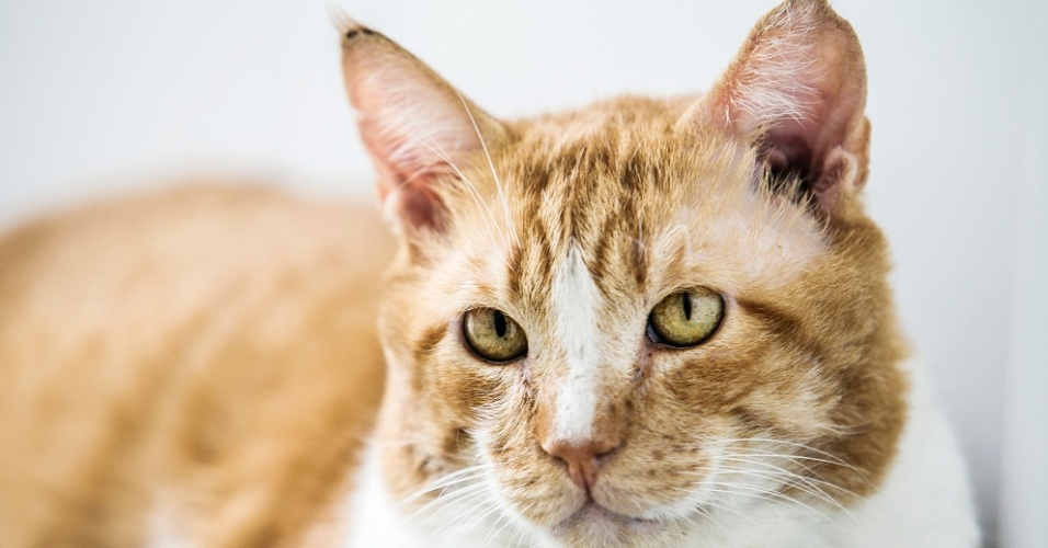 Charles foi atropelado e chegou com indicação de eutanásia. Na avaliação detalhada, os veterinários do CCZ decidiram tratá-lo, e o bichano sobreviveu. A contusão mais séria foi uma fratura de quadril. Como sequela, Charles terá que tomar um remédio por toda vida para poder defecar melhor. Também tem Aids felina e não pode ter contato com outros gatos. Tem aproximadamente 8 anos chegou ao CCZ em agosto de 2015