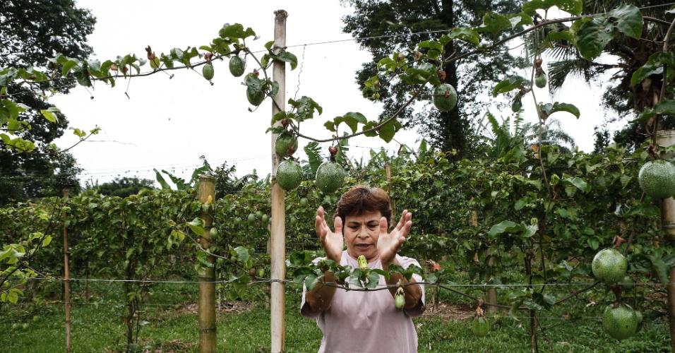 17.mar.2017 - Tomi mostra o maracujá azedo, um dos alimentos orgânicos produzidos no sítio
