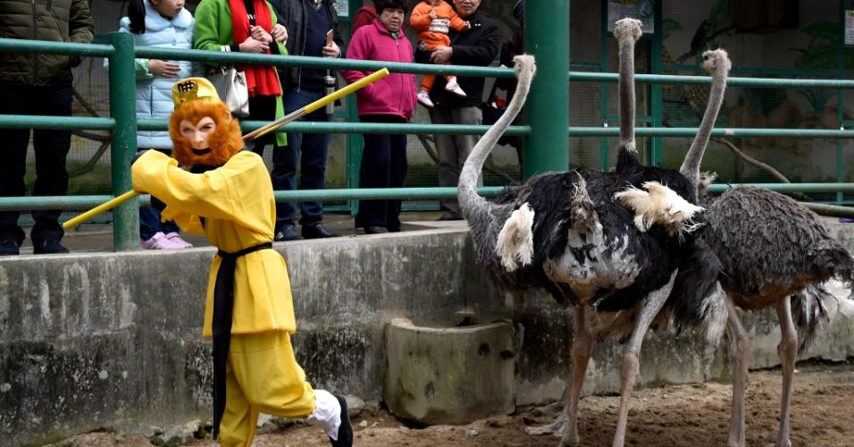 4.fev.2016 - Funcionário fantasiado de macaco se apresenta junto aos avestruzes no zoológico nacional de Forest Park Fuzhou, em Fuzhou, no sudeste da China. Apresentações e atividades com figuras de macacos são realizadas no parque para marcar o próximo Ano Novo Lunar chinês, que começa em 8 de fevereiro, e será o ano do macaco