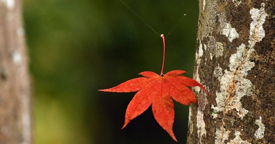 21.nov.2016 - Folha seca cai e fica presa a uma teia de aranha nos jardins do templo Hogonin em Kioto, no Japão