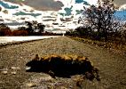 Estradas do Brasil têm 475 milhões de bichos atropelados por ano - Alex Bager