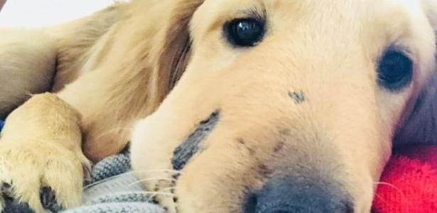 O filhote Todd ficou famoso depois que sua foto foi compartilhada nas redes sociais, com o rosto inchado pela picada de cobra - Paula Godwin