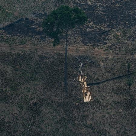 Sob governo do presidente Jair Bolsonaro, Amazônia perdeu área de 3.300 campos de futebol por dia - Victor Moriyama/Amazônia em Chamas