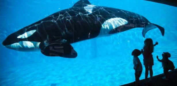 Crianças olham uma orca no parque SeaWorld, em San Diego, na Califórnia (EUA)