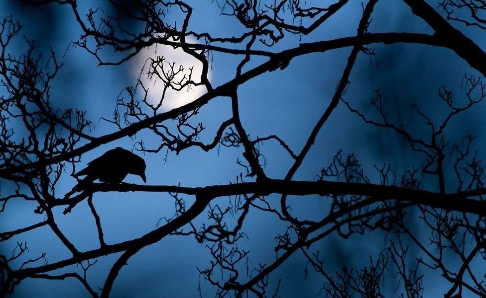 19.out.2016 - A foto de um corvo pousado numa árvore, em contraluz com o luar, foi registrada no Valentines Park, em Londres