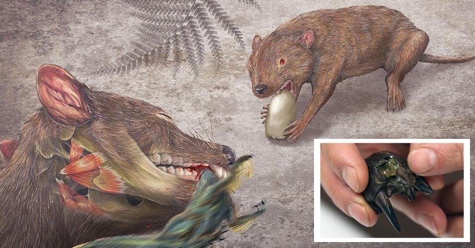 A MORDIDA MAIS FORTE DA HISTÓRIA - Se você pensou no leão ou no tigre-dente-de-sabre, errou. A mordida mais potente já registrada pelos cientistas entre os mamíferos é a do marsupial Didelphodon vorax, que viveu ao lado de dinossauros ferozes na era mesozoica. Ele era um predador de pequenos dinos, mostra estudo da Universidade de Washington. Os pesquisadores compararam um crânio fossilizado do Didelphodon descoberto nos EUA (foto em destaque na imagem ilustrativa) com o de mamíferos conhecidos pela forte mordida, como as hienas. Ele também tinha caninos similares aos de felinos e molares cortantes, o que permitia morder profundamente, matar, furar ovos e esmagar ossos.