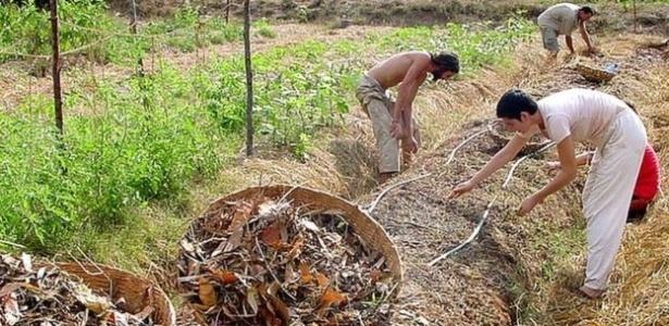 Há em Auroville mais de uma dezena de fazendas de diferentes tamanhos