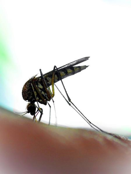 Zika - Getty Images/iStockphoto
