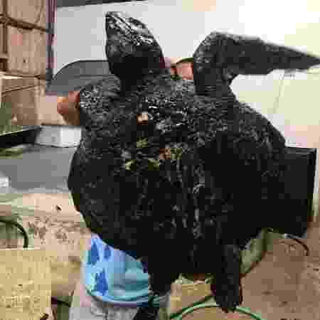Tartaruga encontrada na praia da Redinha, em Natal, que está no Centro de Descontaminação de Fauna Oleada da UERN, em Mossoró (RN) - Centro de Descontaminação de Fauna Oleada da UERN