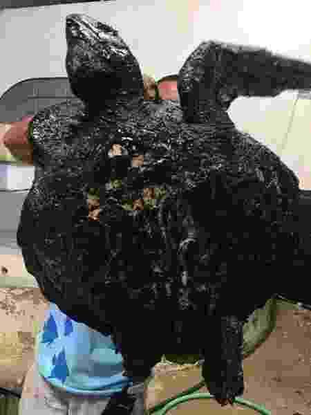 Tartaruga encontrada na praia da Redinha, em Natal, que está em tratamento - Centro de Descontaminação de Fauna Oleada da UERN