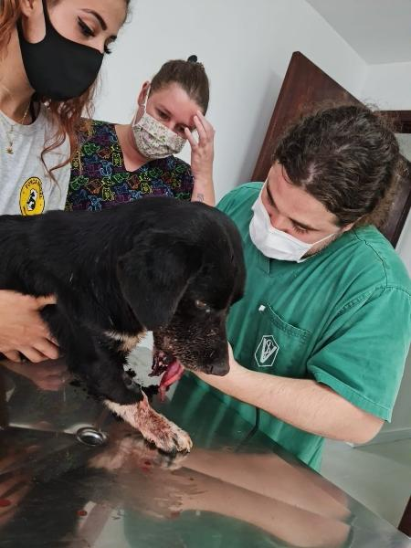 Cão foi resgatado e levado para hospital veterinário, onde está internado - Divulgação/ONG Força Animal