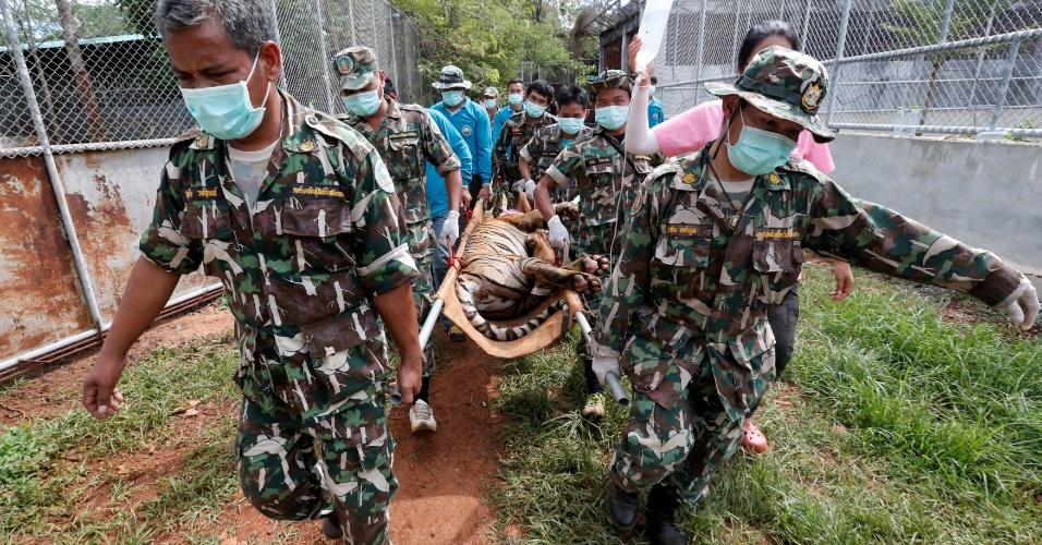 3.jun.2016 - Tigre sedado é removido por autoridades do controverso Templo dos Tigres, na província de Kanchanaburi, na Tailândia. A operação para a retirada dos animais começou na semana passada e ainda pode durar alguns dias. O local, atração turística bastante popular, é acusado de maus-tratos e tráfico de animais