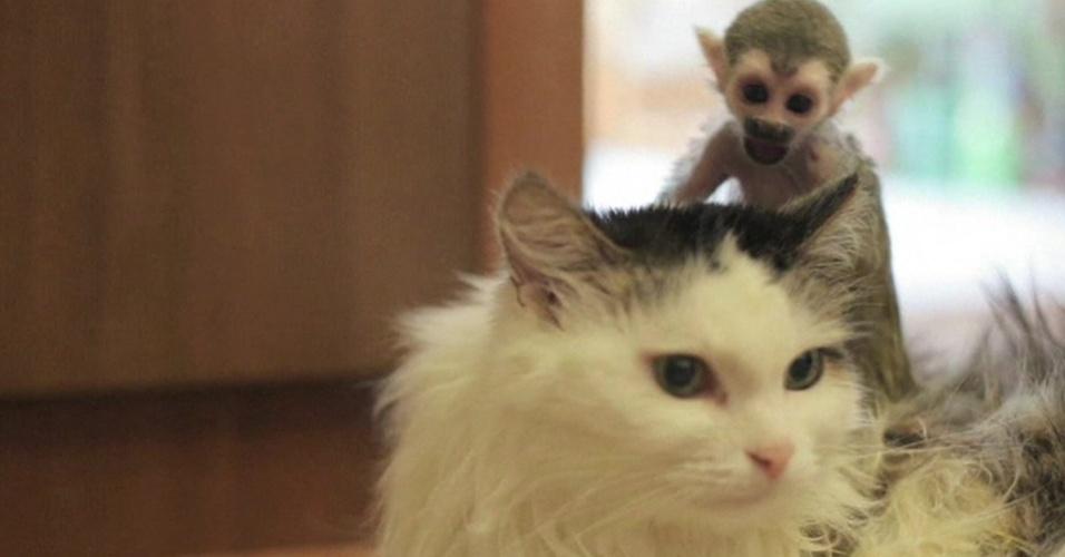 Um filhote de macaco-esquilo abandonado pela mãe em um zoológico da Rússia foi ?adotado? por uma gata.