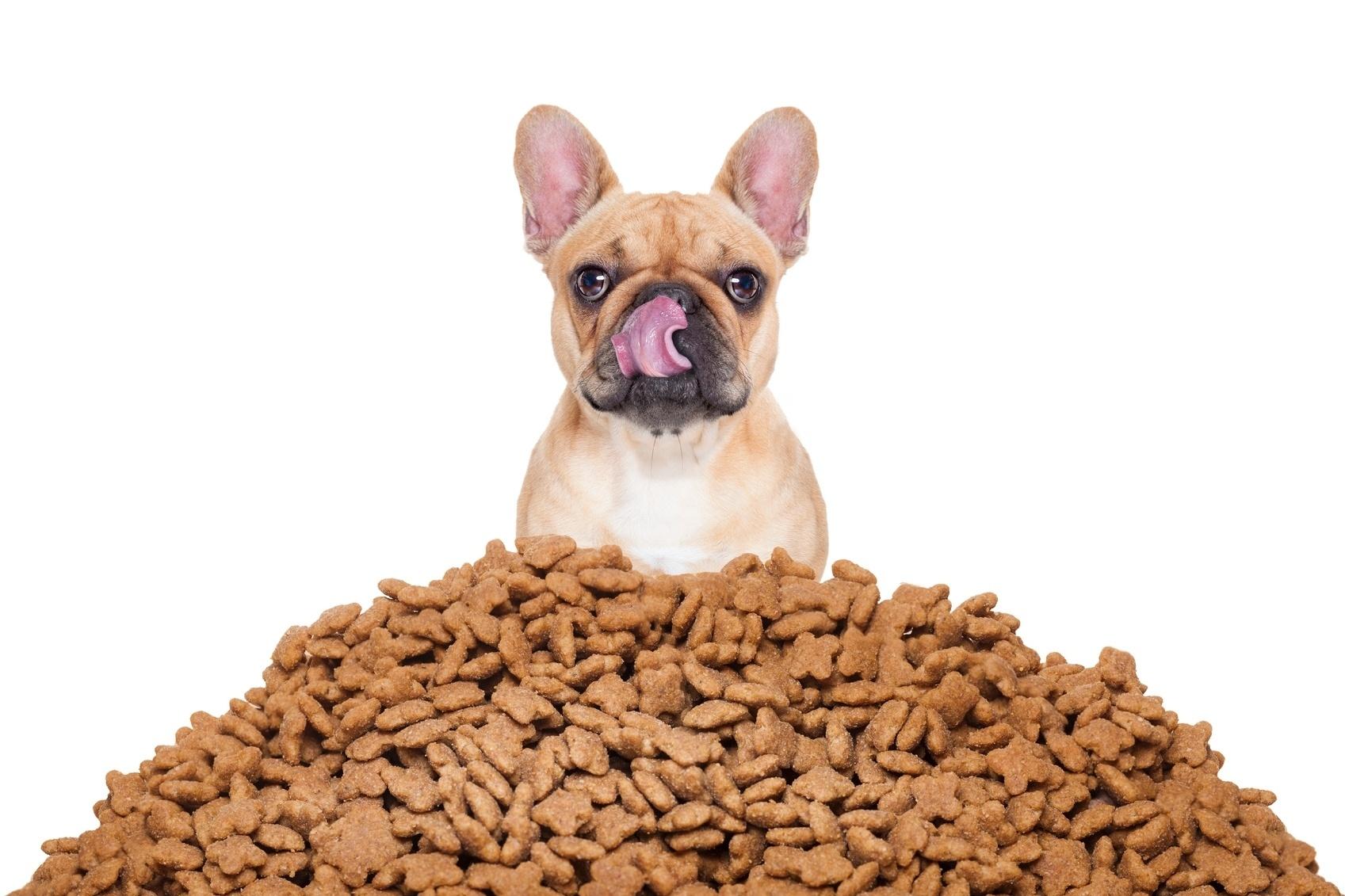 Seu cão come muito ou rápido demais? Saiba como ajudá-lo - 10/05/2017 - UOL  Universa