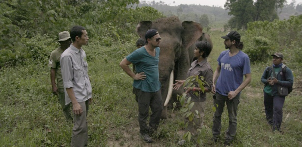 DiCaprio está sempre engajado em causas ambientais. Em 2016, ele visitou a última grande floresta onde elefantes, rinocerontes e orangotangos ainda convivem naturalmente na Indonésia