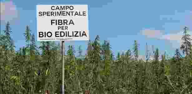 Campo experimental de maconha situado na província de Taranto, sul da Itália, destinado ao setor de bioconstrução - South Hemp Tecno/Reprodução