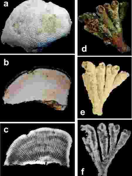 Etapas de análise dos corais de Abrolhos feitas pela Uerj - Divulgação