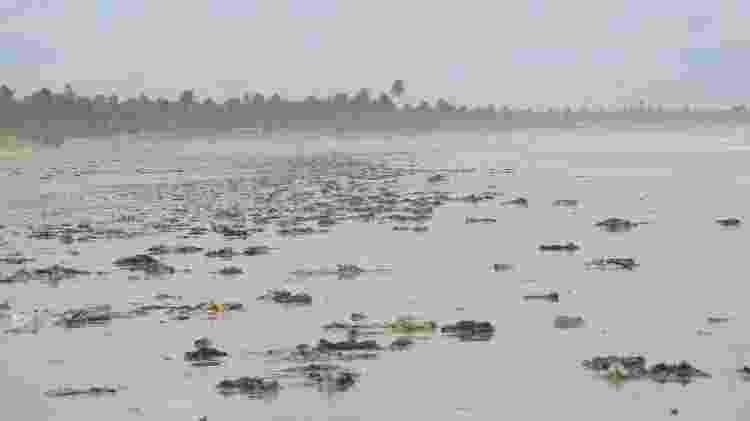 Manchas de óleo em praia de Feliz Deserto, no sul de Alagoas  - Raquel Grison/Laboratório de Morfologia Sistemática e Ecologia de Aves do Museu de História Natural da Ufal