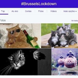 Após polícia pedir silêncio sobre operações em andamento, belgas respondem com fotos de gatos nas redes - Reprodução/Twitter