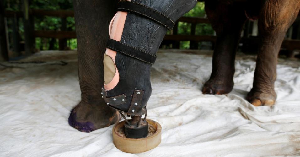 """Motola testa a """"perna"""" nova trocada por membros da Fundação Asiática para Elefantes em Lampang, na Tailândia"""