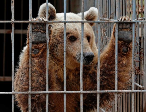 28.mar.2017 - O urso Lula, no zoológico de Mosul, no Iraque